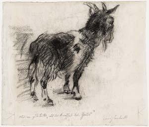 Lovis Corinth, Ziege, 1905, Kunsthalle Bremen – Der Kunstverein in Bremen, Kupferstichkabinett